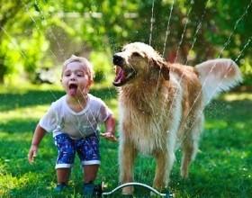 Os melhores animais de estimação para crianças